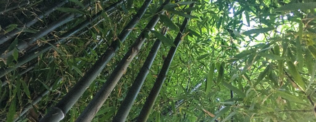 Large amounts of bamboo
