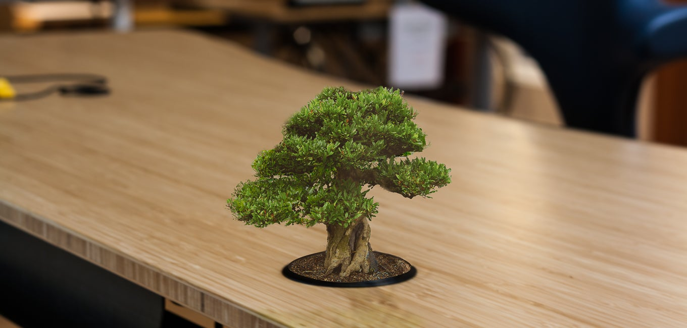 A Bonsai tree in place of Wire Management Grommets on a Jarvis Bamboo standing desk